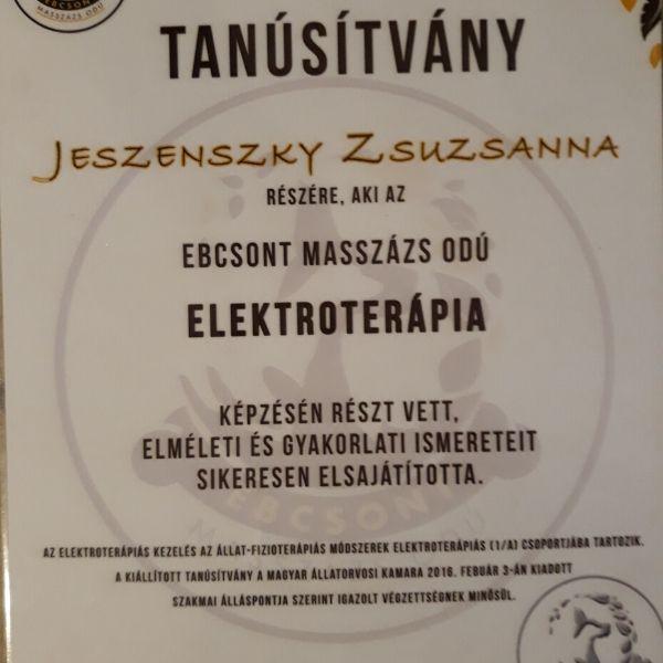 Kutyás Elektroterápia Tanúsítvány
